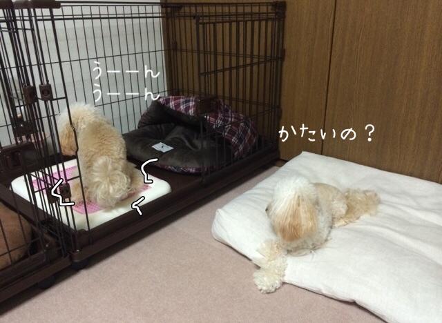2015.10.26 おトイレ中モコ2