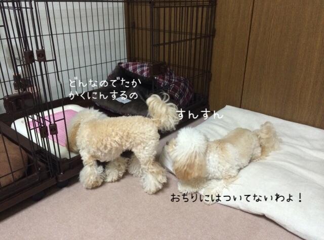 2015.10.26 おトイレ中モコ4