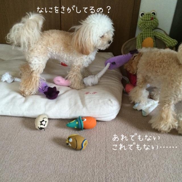 2015.10.26 おトイレ中モコ6
