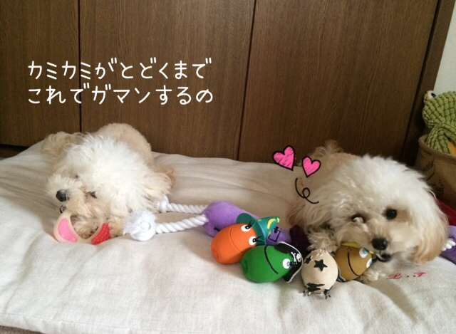 2015.10.26 おトイレ中モコ7