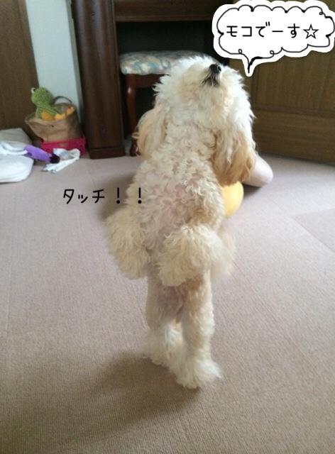 2015.10.27 モコ タッチできるよ!