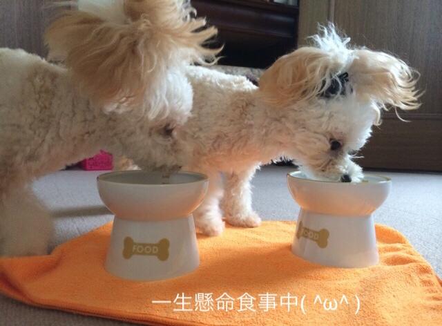 猫壱 ハッピーダイニング 犬用脚付フードボウル 4
