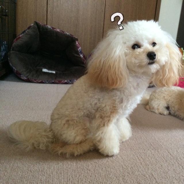 猫壱 ハッピーダイニング 犬用脚付フードボウル 2