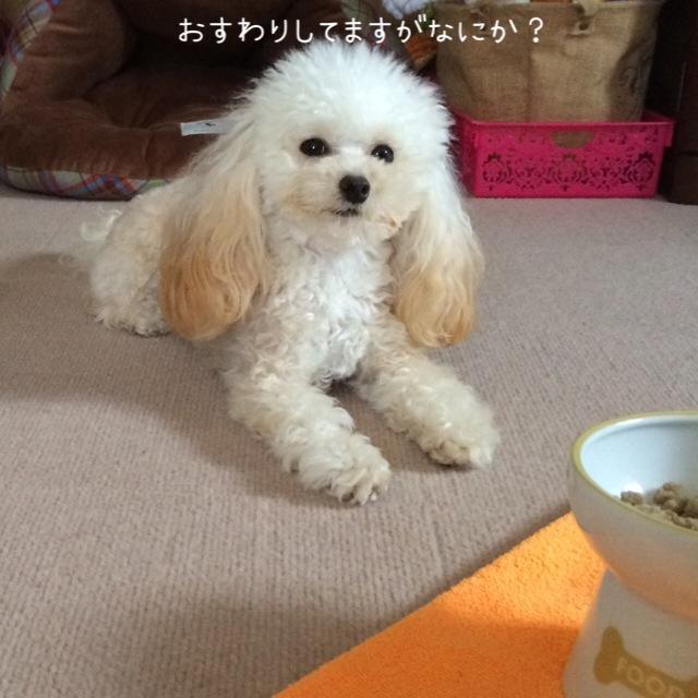 猫壱 ハッピーダイニング 犬用脚付フードボウル 3