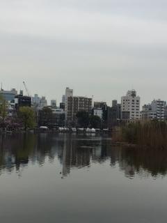 上野公園の桜_007