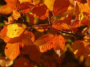 autumn-3130_640_convert_20151115215954.jpg