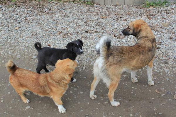 ルーマニア最大の敵「野犬」の傾...